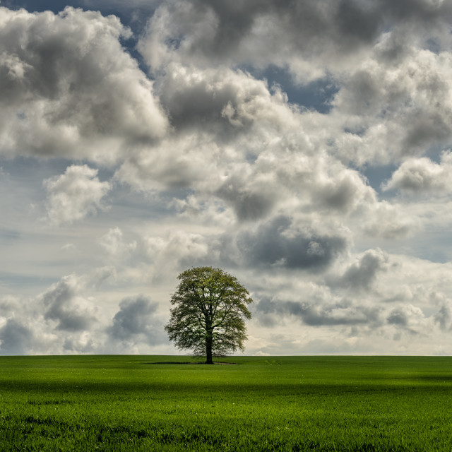"""""""tree on a hill with dramatic sky"""" stock image"""