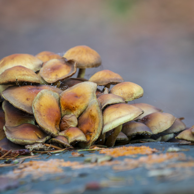 """Group of autumn mushrooms"" stock image"