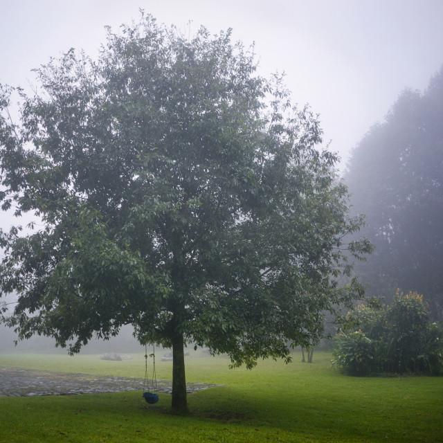 """""""Tree in Fog"""" stock image"""