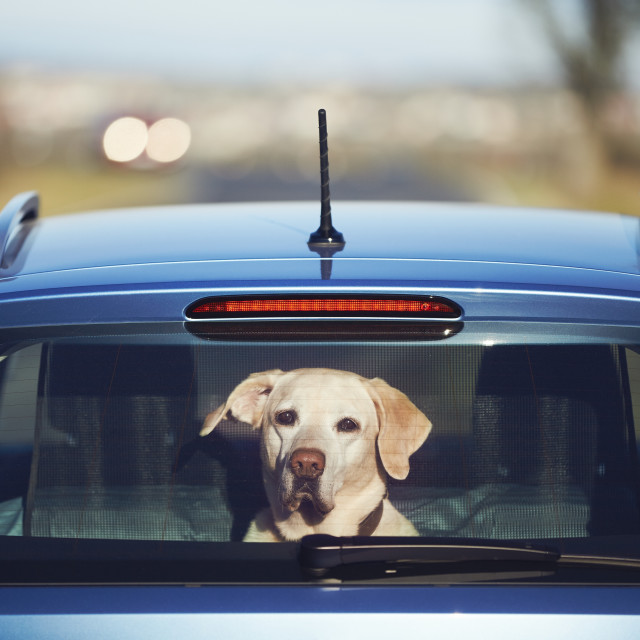 """Travel with dog"" stock image"