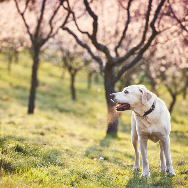 """Dog in spring nature"" stock image"