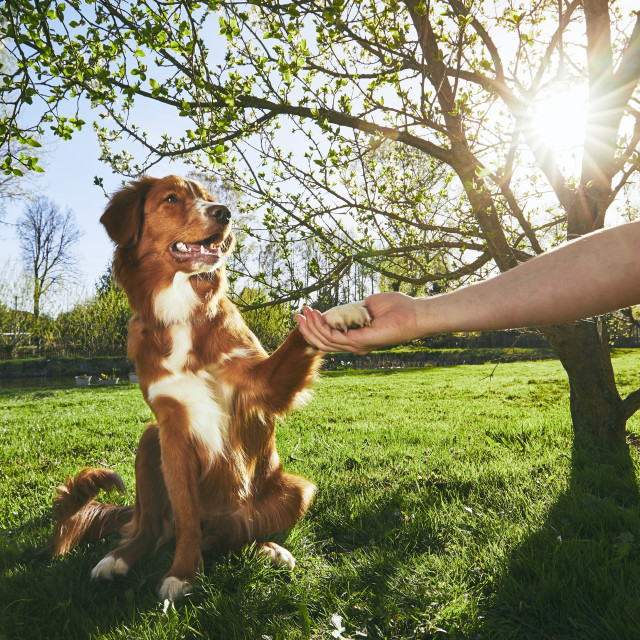 """""""Man holding paw of the his dog"""" stock image"""