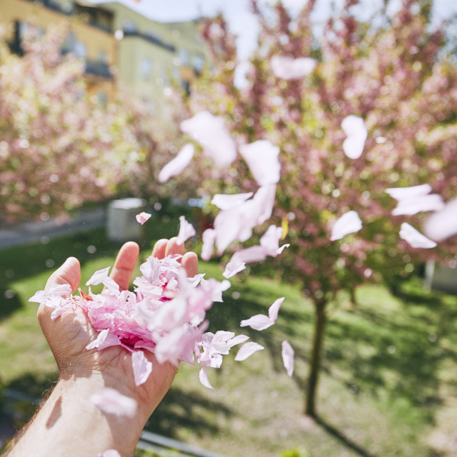"""Windy spring day"" stock image"