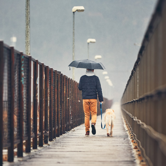 """""""Man with dog is walking in rain"""" stock image"""