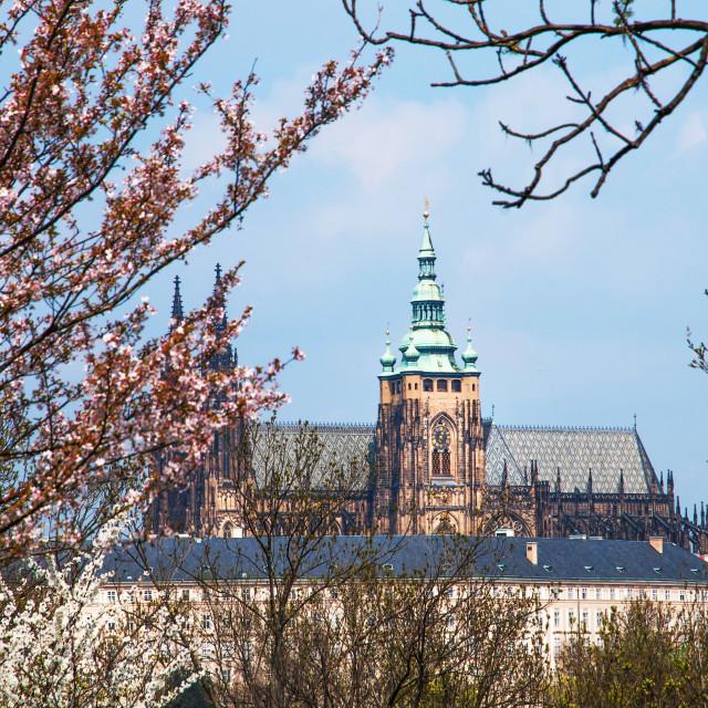 """St Vitus Cathedral in Spring Time. Prague"" stock image"