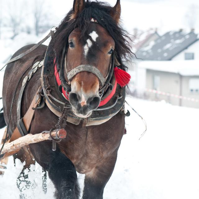 """heavy horses in the winter"" stock image"