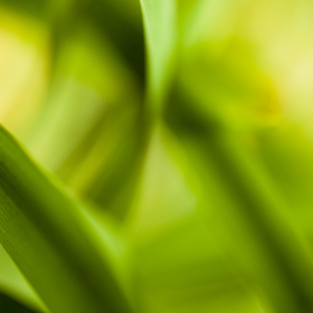 """abstract plant close up shot"" stock image"