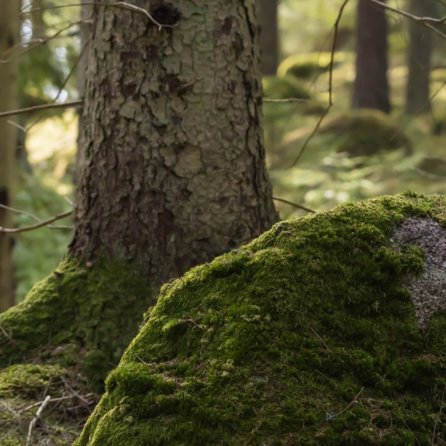 """""""Green mossy forest ground"""" stock image"""