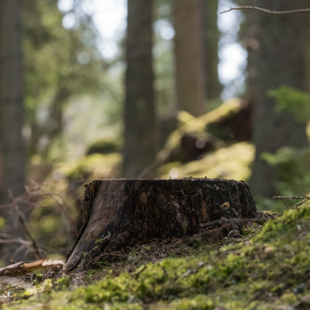 """""""Tree stump in a green forest"""" stock image"""