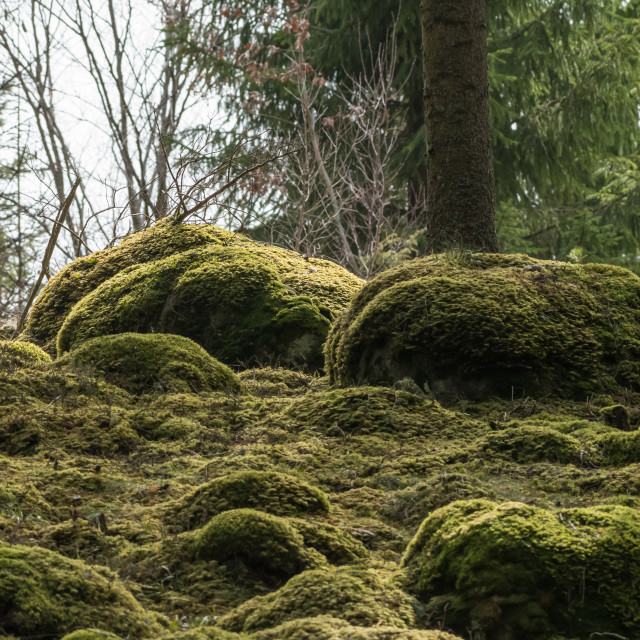 """""""Soft mossy forest ground"""" stock image"""