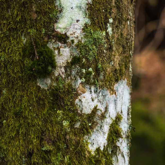 """""""Moss covered tree trunk"""" stock image"""