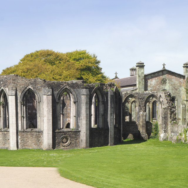 """""""The Abbey ruins at Margam Country Park."""" stock image"""