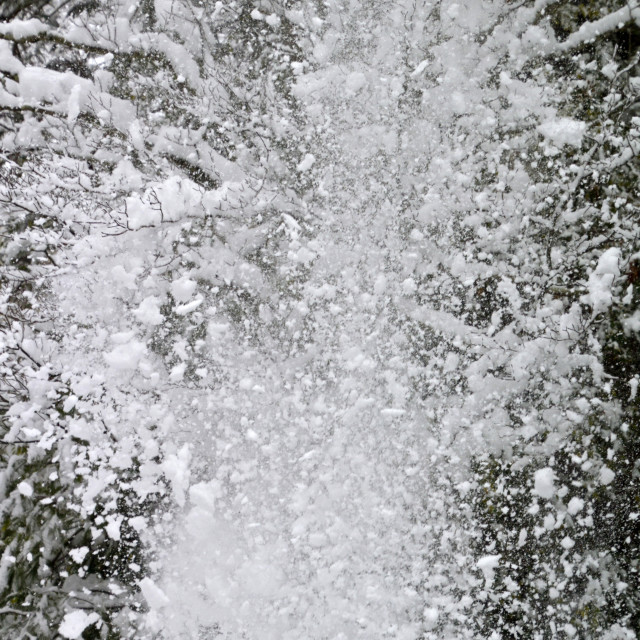 """""""Heavy Fragments of Snow Fall From a Tree"""" stock image"""