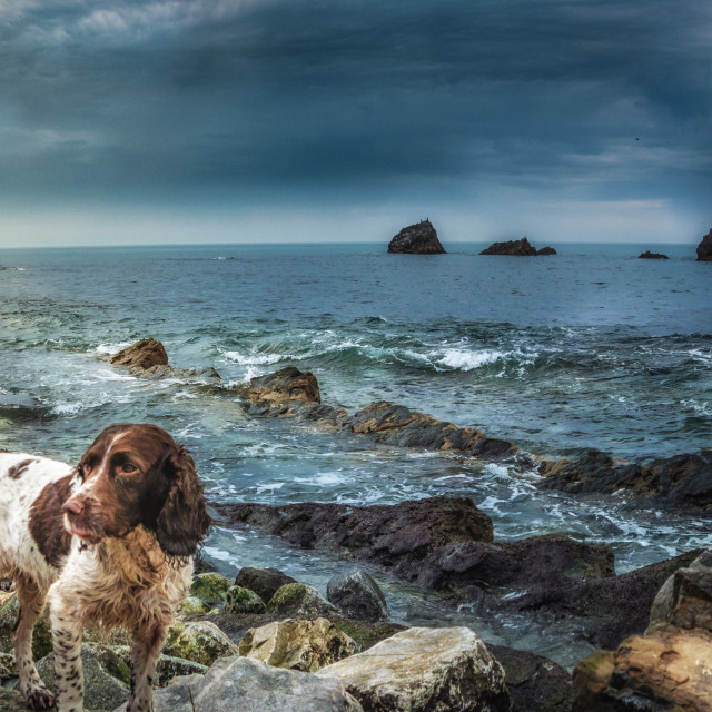 """Dog on the Rocks"" stock image"