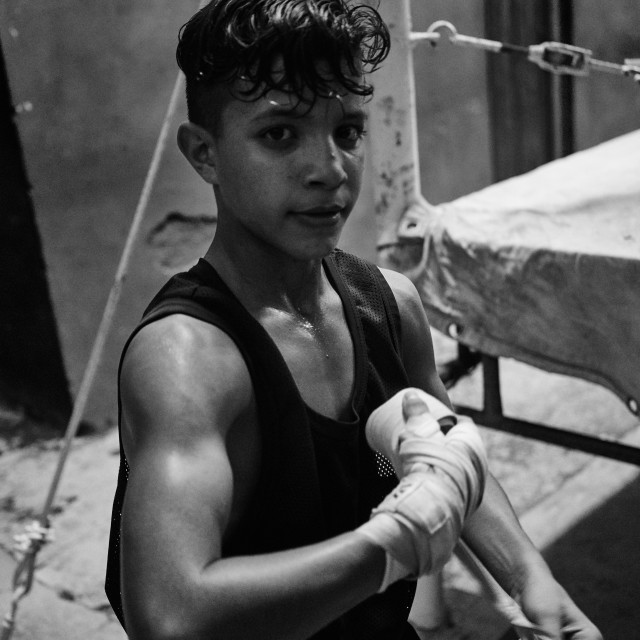"""""""Young boxer"""" stock image"""