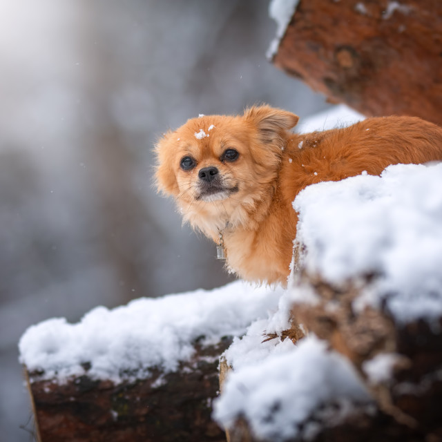 """Little dog explore the big forest"" stock image"