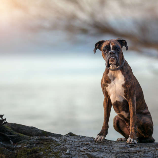 """Dog sitting at riverside"" stock image"