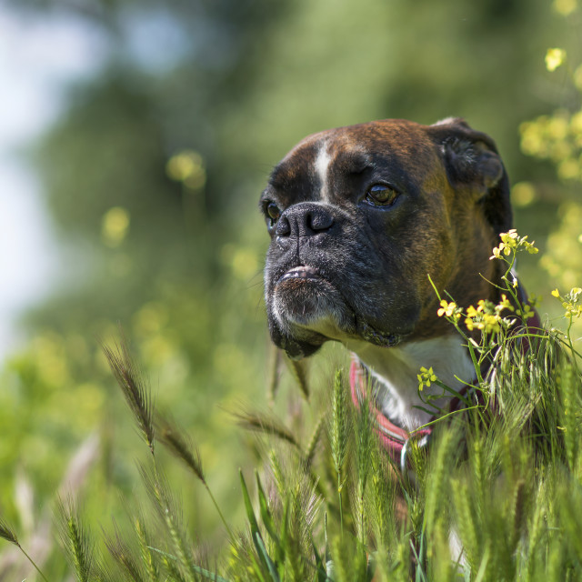 """Dog in the grass"" stock image"