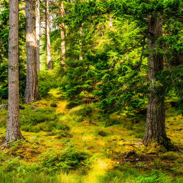 """Sunlight in the Forest"" stock image"