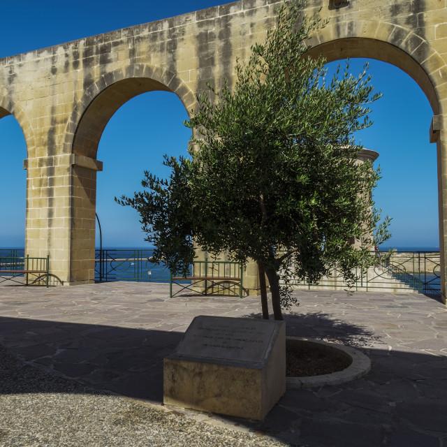 """""""Valletta, Malta upper Barrakka Gardens tree."""" stock image"""
