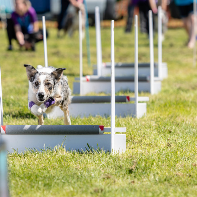 """All about Dogs show Brentwood Essex"" stock image"