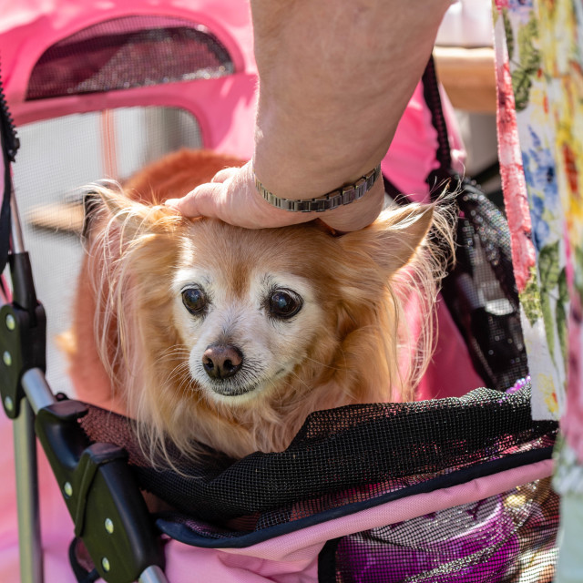 """""""All about Dogs show Brentwood Essex"""" stock image"""