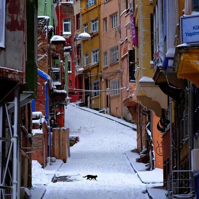 """Istanbul cat"" stock image"
