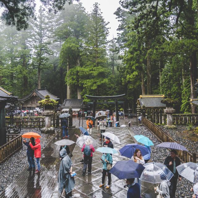 """""""Nikko in Rain"""" stock image"""