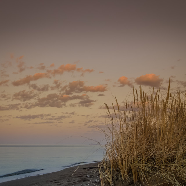 """""""Spring by the shore"""" stock image"""