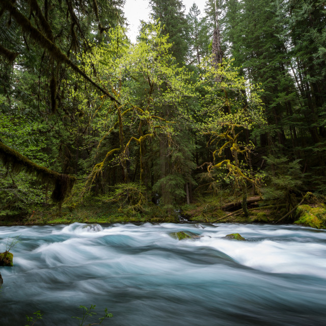 """River Flows Through Forest"" stock image"