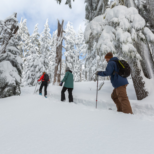"""Snowshoe Hikers"" stock image"