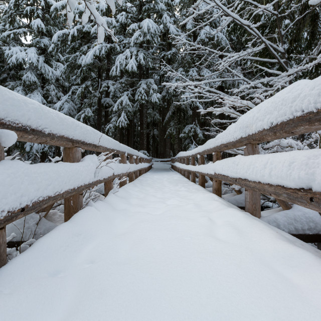 """Snowy Bridge"" stock image"