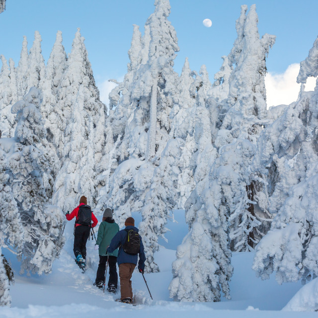 """Snowshoe Hikers Under Moon"" stock image"