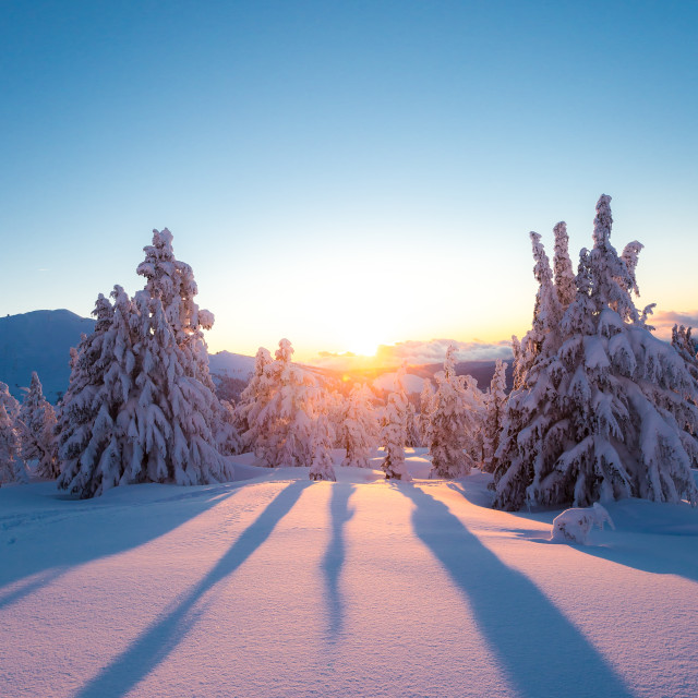 """Snowy Tree Shadows"" stock image"