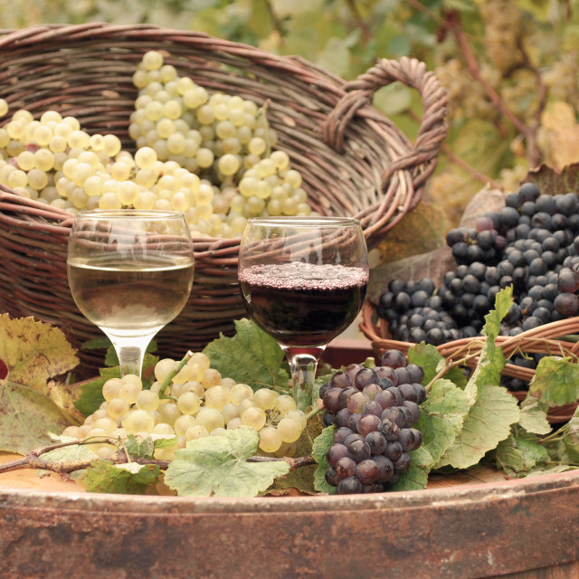 """red and white wine autumn season"" stock image"