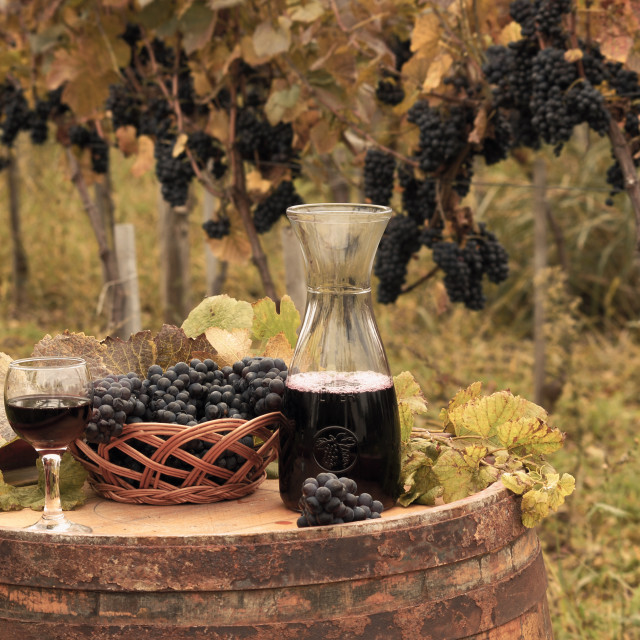 """Red wine and grape autumn season"" stock image"