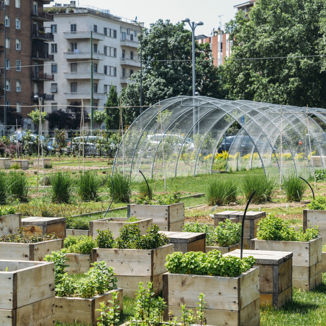 """Urban farming sustainability concept, captured in Milan, Lombardy, Italy."" stock image"