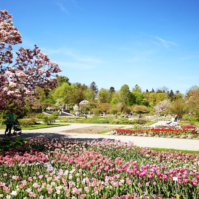 """MUNICH, GERMANY - Botanical garden"" stock image"