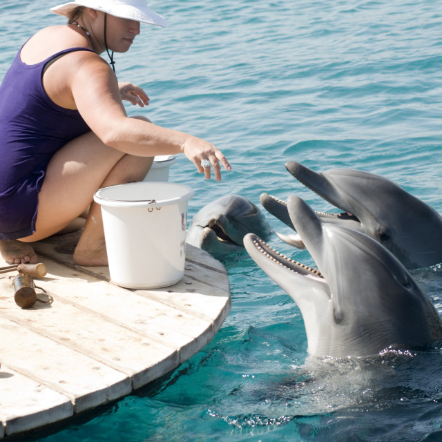 """Israel, Eilat, Dolphin Reef Beach"" stock image"