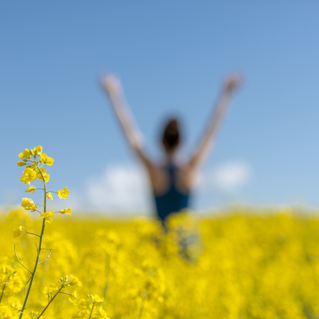 """""""out of focus back view of a young woman with arms raised in a yellow field, flower in focus."""" stock image"""
