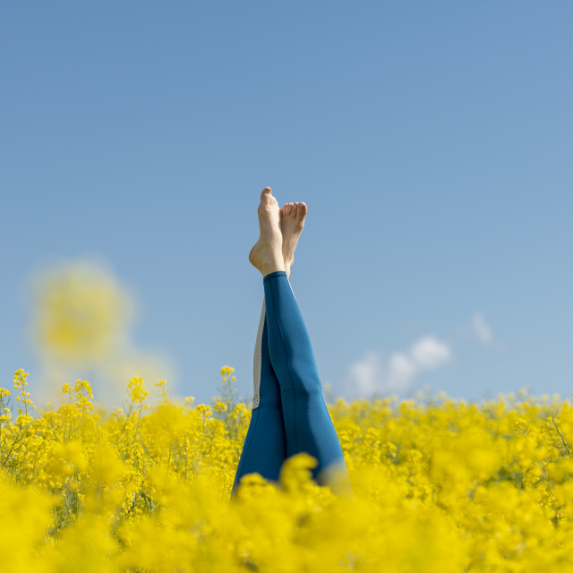 """woman wearing blue leggings doing a headstand in a yellow field"" stock image"