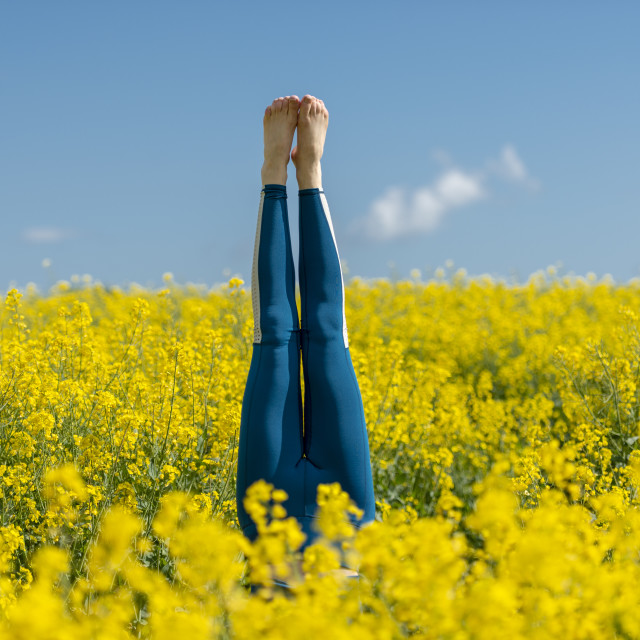 """""""woman wearing blue leggings doing a headstand in a yellow field"""" stock image"""
