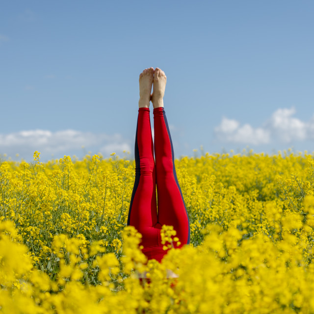 """""""woman wearing red leggings doing a headstand in a yellow field"""" stock image"""