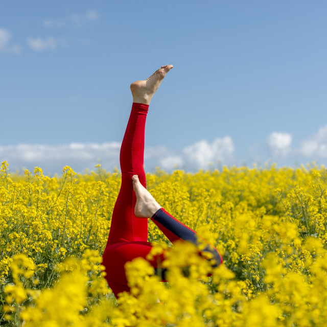 """woman wearing red leggings doing a headstand in a yellow field"" stock image"
