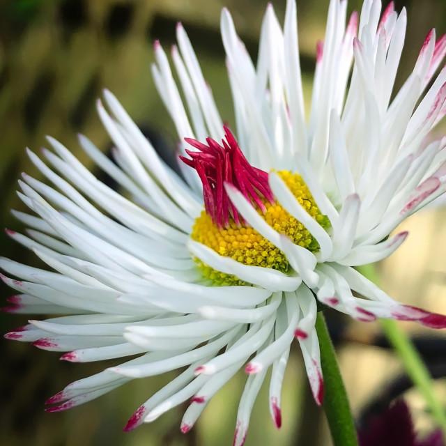 """Beautiful Spring Flower"" stock image"