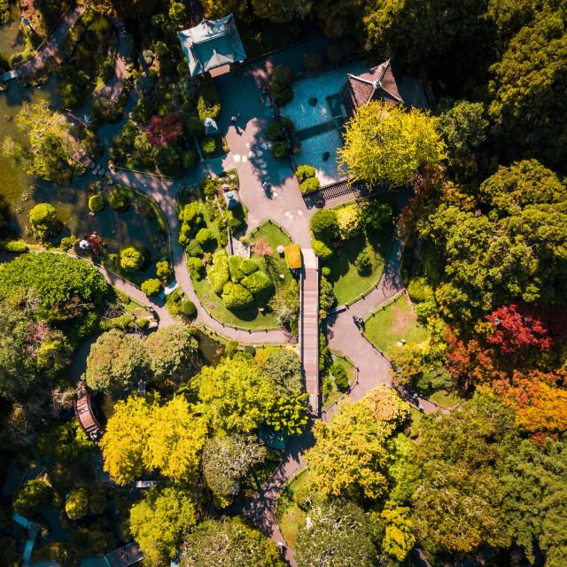 """Japanese botanical garden in San Francisco Golden Gate Park"" stock image"