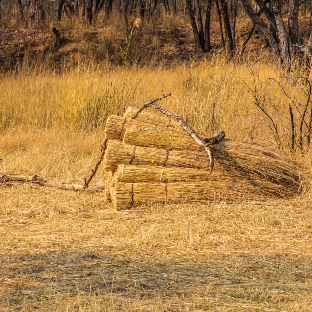 """Cut grass bundled for thatching, Zimbabwe."" stock image"