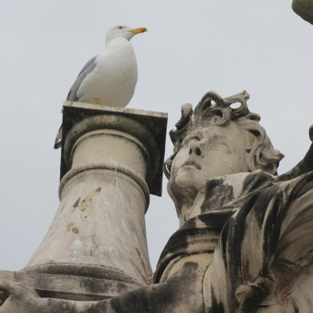 """Seagulls in Rome"" stock image"