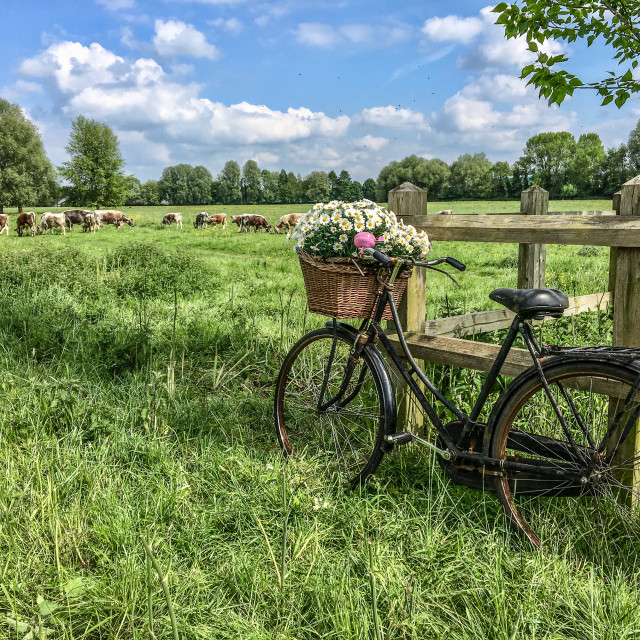 """Bicycle with flowers"" stock image"