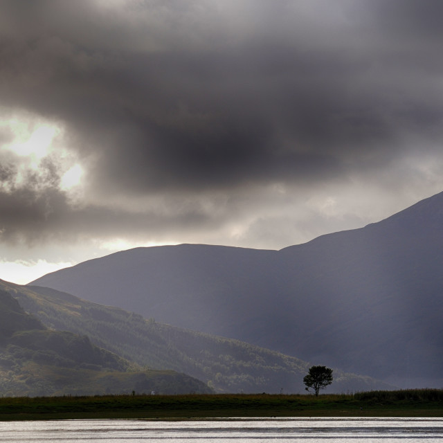 """""""The Lonely Tree - Highlands of Scotland"""" stock image"""